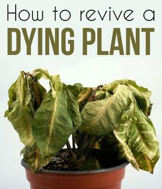 How To Revive A Dying Plant - Gardaholic.net