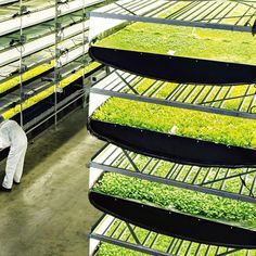 Aerofarm has built the world's largest vertical farm (Wired UK)
