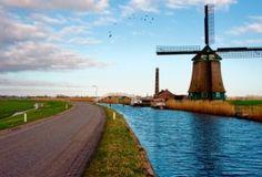 В Голландии создают асфальт на основе лигнина
