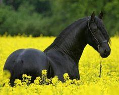 mehr als 70 super sch ne pferde bilder sch ne pferde wiese und pferde. Black Bedroom Furniture Sets. Home Design Ideas