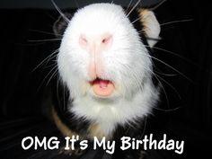 Happy Birthday to Buddy!