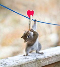 Get squirrels to hang escort cards