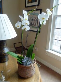 How to care for orchids: When they are done, cut them about half an inchabove the second node from the bottom. Fertilize every two weeks with 1/4 tsp. per gallon o...