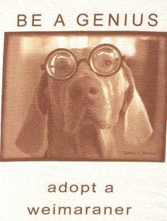 Be a genius t-shirt. Adopt a Weim.