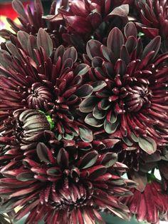 Dahlia: the perfect wedding flower