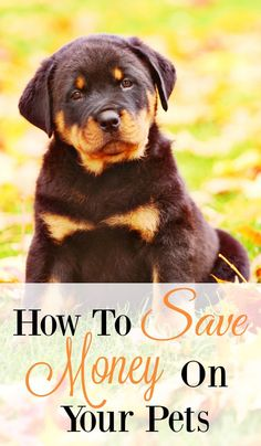 Tips to Save money on pets. We love our pets like kids but they are so expensive. There's vet bills,food, medication, and so much more.  Use these tips to help save you money
