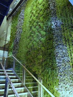 Zizzi Restaurant | Indoor wall by BioTecture in Gateshead Me… | Mark Laurence | Flickr