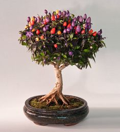 20 Of The World's Most Beautiful Bonsai Trees.