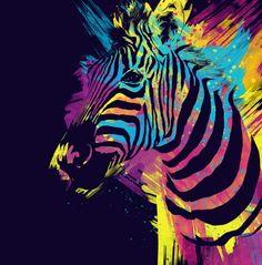 Cute Animal Artworks  Zebra Splatters by Olechka