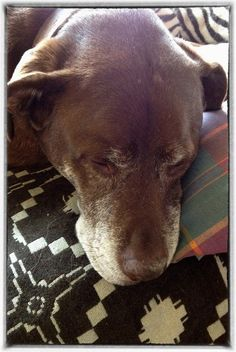 nothing sweeter than an old dog.