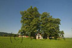 die Kapelle in Kleinrückstetten,  Pfarrei Teisendorf ©  ROHA-Fotothek