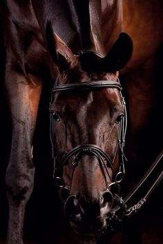 showgirlglitz: I don't normally post warmblood type horses but holy shit wow All The Pretty Horses, Beautiful Horses, Animals Beautiful, Cute Animals, Horse Photos, Horse Pictures, Pur Sang, Majestic Horse, All About Horses