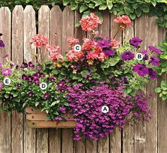 Use contrasting colors to create drama in your container for gardening. Here, shades of purple mix well together -- and make a stunning contrast for a salmon geranium. This planting grows best in full sun. A. Lobelia erinus--3 B. Petunia'Blue Velvet'--1 C. Geranium (Pelargonium 'Fantasia Salmon')--2 D. Viola 'Sorbet Purple Duet'--2 E. Lavender pink Petunia --1/
