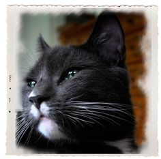 #Cats...  Like,Repin,Share, Thanks!