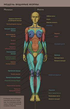 Human Anatomy Female, Human Anatomy Drawing, Anatomy Study, Body Drawing, Anatomy Art, Human Reference, Figure Drawing Reference, Anatomy Reference, Anatomy Sculpture