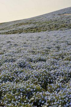 {<3} field of flowers
