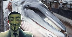 Anonymous Is Now 'Hacking' A Country Because They Kill Whales