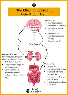 Stress can have a big impact on your brain and gut health, as well as on your HPA axis. View our infographic to learn more about the Gut-Brain Connection. Gut Brain, Brain Health, Gut Health, Health And Wellbeing, Mental Health, Health Facts, Health Tips, Brain Connections, Effects Of Stress
