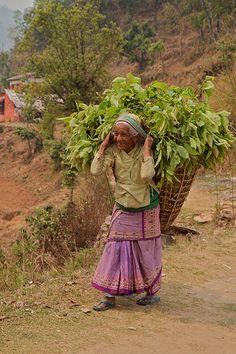 Nepal - by olidev, via Flickr