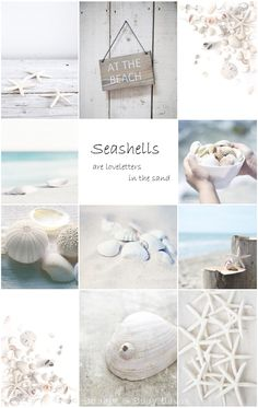Moodboard Beach finds - Seashells