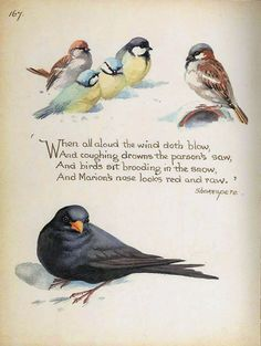 Blackbird and Tits on Snow by Edith Holden