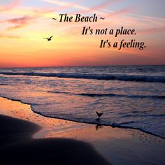 Plan Your Myrtle Beach Vacation - Go to VisitMyrtleBeach.com for exclusive vacation deal packages!  The Beach -- It's not a place.  It's a feeling.