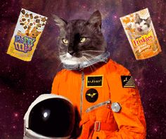 psychedelic cats cats in space gif