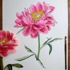 I found this artist on Tumblr and I thought that all of their artwork was done very well. It was difficult to pick one but I decided on this piece. I think this is very inspiring because the artist had used a real flower as a reference point and added their own details in the painting. I love how I can see all the small details in the painting. I really like it when artists' interpret a reference into their own thing.