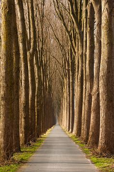 Road with trees - Damme, Belgium by Bart Heirweg