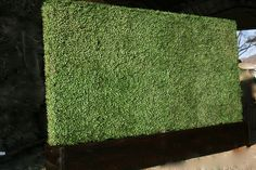 Artificial hedge wall can add depth and texture to any indoor space. Bringing outdoor concepts indoors sets a pace that opens visitors up to other design concepts within the space - allowing more playful and creative design possibilities. Creative Walls, Creative Design, Artificial Hedges, Ficus Tree, Garden Park, Floor Ceiling, Geraniums, Indoor, Bright Lights