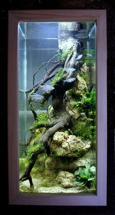 An aquarium is an enclosure with at least one clear side that houses water-dwelling fish, plants and other livestock and decorations. An aquarium offers a place for fish and plant life including corals and reefs to live in a contained… Continue Reading → Bar Aquarium, Aquarium Nano, Biotope Aquarium, Aquarium Terrarium, Nature Aquarium, Aquarium Design, Aquarium Fish Tank, Aquariums Réservoir, Aquariums Super