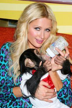Bin traurig, weil ich nicht dieser Schimpanse (wie auf Foto ersichtlich) sein kann.