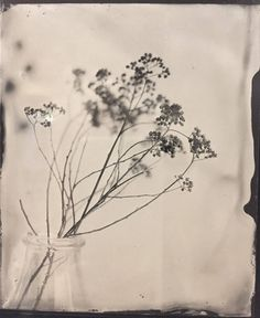Annabelle Antas  @annabelleantas  http://ift.tt/2ilihWt  the image is unique made on tin with the process called wet plate collodion  website art - projects.annabelleantas.com / commercial - http://ift.tt/2ilihWt  #tintype #wetplate #blackandwhite #collodion  #visualsoflife #womeninphotography #inspiration #photo #photos #pic #pics #picture #photographer #pictures #snapshot #art #beautiful #photoshoot #photodaily #blackandwhite #photography
