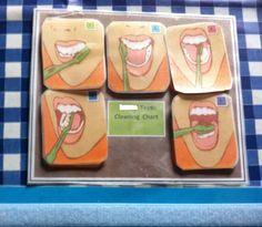 Teeth chart