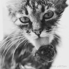 #fotografia #фотограф#vladimiryARTsev #котэ #безкотаижизньнета #кот #котик