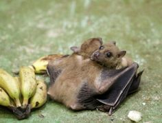 Bat hug - SunnyLOL