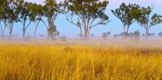 Aboriginal people once used native grasses to produce bread. So let's resurrect Australia's ancient breadmaking tradition. Aboriginal Language, Carbon Sequestration, Types Of Flour, Australian Food, Aboriginal People, Food Staples, Food Industry, Grasses, How To Make Bread