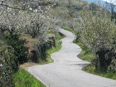 En el Valle del Jerte existen algunas pistas agrícolas de gran belleza. Recorrerlas a pie o en coche con precaución es un deleite para los sentidos. Este es un tramo de una de ellas cercano a Valdastillas, durante la floración del cerezo de 2010.