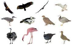 birds png set by mossi889 on deviantART
