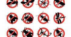How You Can Control Hummingbird Feeder Pests Such as Ants, Bees and Wasps Mosquito Control, Best Pest Control, Pest Control Services, Bug Control, Tick Control, Casablanca, Types Of Bugs, Flea Spray, Termite Control