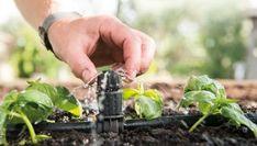 ¿Sabes cómo ahorrar tiempo y agua en el cuidado de tu jardín? A continuación te contamos cómo hacer que el mantenimiento de tu jardín sea más eficiente.