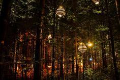Redwoods Nightlights | Redwoods Treewalk Rotorua Redwoods Treewalk