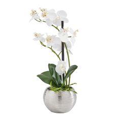 Diese naturgetreue Orchidee strahlt Ruhe und Entspannung aus. Träumen Sie von Asien!