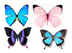 1278200112_55_FT0_butterflies (562x418, 196Kb)