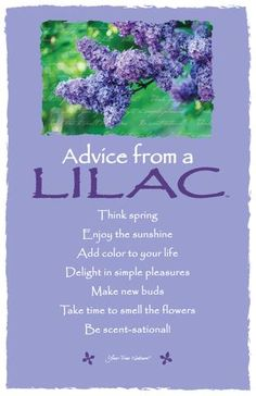 Advice from a Lilac Frameable Art Card – Your True Nature, Inc. Advice Quotes, Life Advice, Good Advice, Posivity Quotes, Wishes For Daughter, Flower Meanings, Plant Meanings, Spring Quotes, Character Quotes