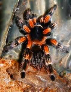 The Spark Test and Spark Testing Metals Fractal Art, Fractals, Pet Spider, Spider Tattoo, Jumping Spider, Beautiful Bugs, Colorful Animals, Bugs And Insects, Mundo Animal