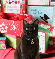 Make the howliday season meowy and bright. Adopt a black cat and save a life.