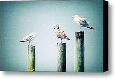 3 Seal Gulls Stretched Canvas Print / Canvas Art By Dick Wood, a great addition to the coastal chic look in your home or cottage