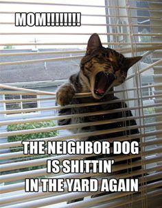 <h1>Funny cats – 23 pics</h1>