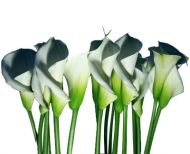 White Calla Lilies and most other flowers. Where to buy, by the bulk for DIY weddings.  Save over 70%